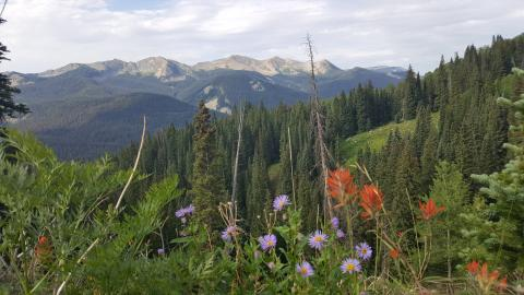 I went on a long road trip.  First I went to Colorado and went hiking in the mountains looking for wildflowers.