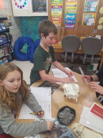 Students learned about animals of the tundra.