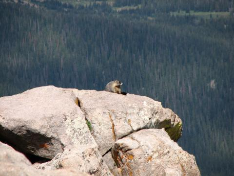 Even the marmots like to sit and enjoy the view sometimes.