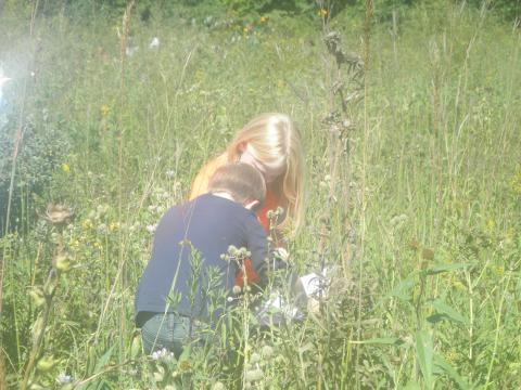 Getting a close look at the prairie flower
