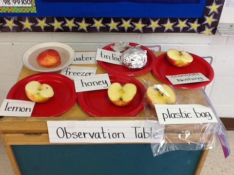 A week learning about apples